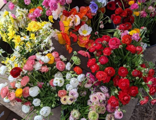 Get your floral fix at these 8 Alabama flower farms