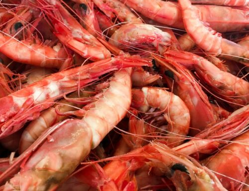 Why Royal Reds are 'the crowned jewel of Alabama Shrimp'