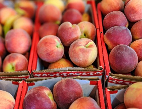 Your all-seasons guide to u-pick fruit in Alabama