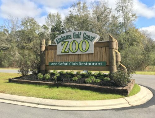 """Find out why the Alabama Gulf Coast Zoo is called """"The Little Zoo That Could"""""""
